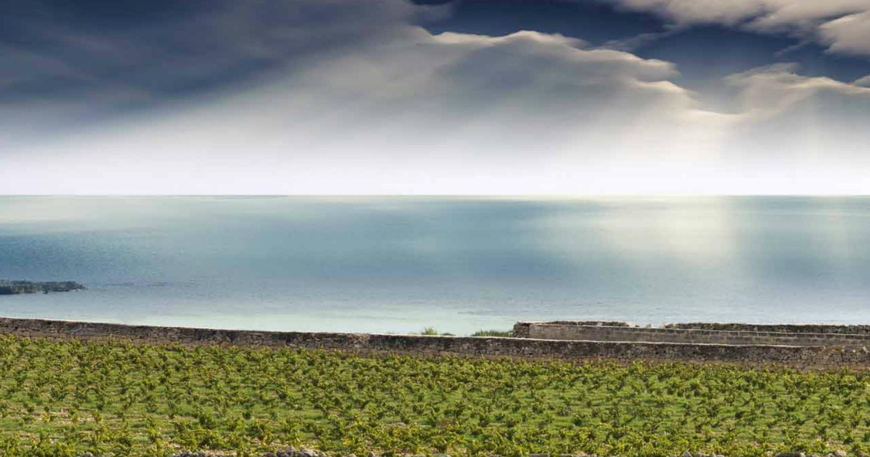 Viticoltura del mare a Favignana