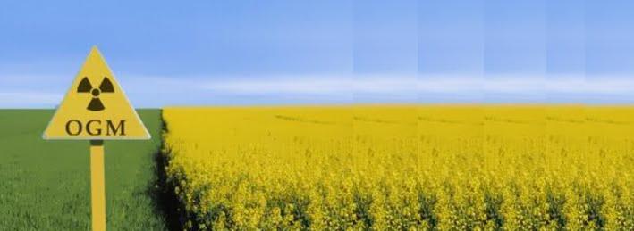 Ancora sugli OGM