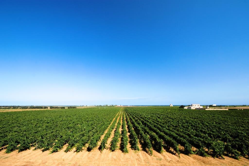 Tre nuovi vini per scoprire i vitigni reliquia della Puglia