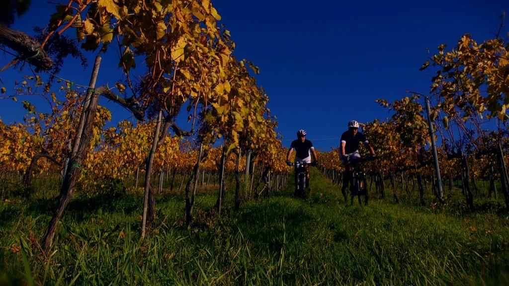 Prosecchissima, in mountain bike tra le colline della Capitale Europea del Vino 2016