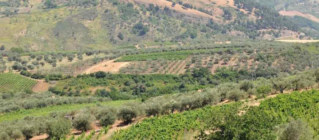Basilicata: olio, vino e paesaggio strategici per lo sviluppo