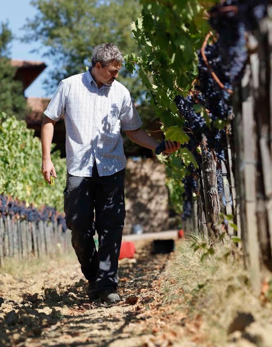 """Il Brunello  è tra i  i """"vini a cinque stelle"""" premiati da Vinitaly"""