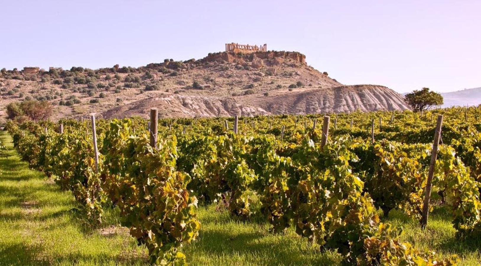Vitigni autoctoni e vini organici della Sicilia al Vinitaly