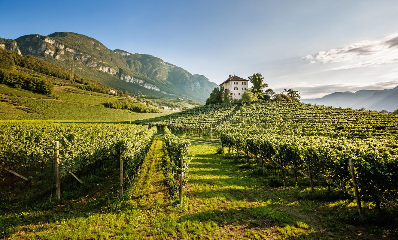 Alto Adige, un viaggio di vino
