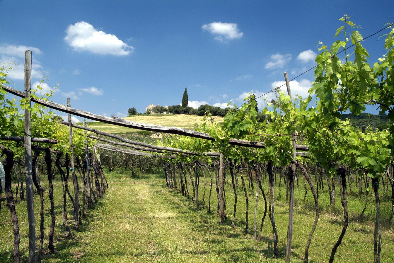 La passione per il vino in Valpantena
