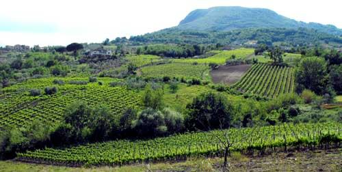 Sviluppo e buone pratiche: presentato in un convegno il Progetto di gemellaggio tra Città del Vino