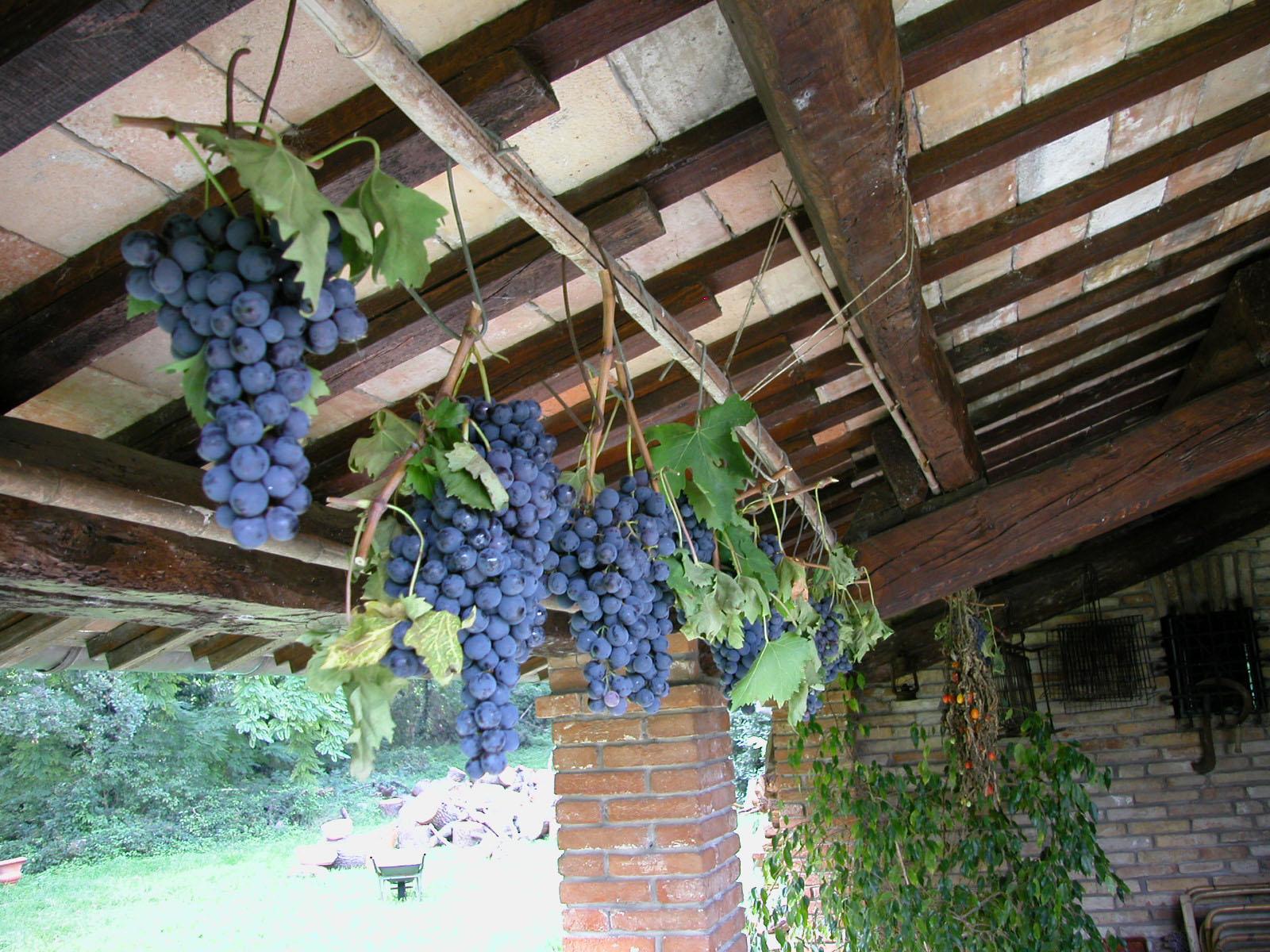 Nelle Terre di Faenza si degusta il vino sotto il cielo stellato
