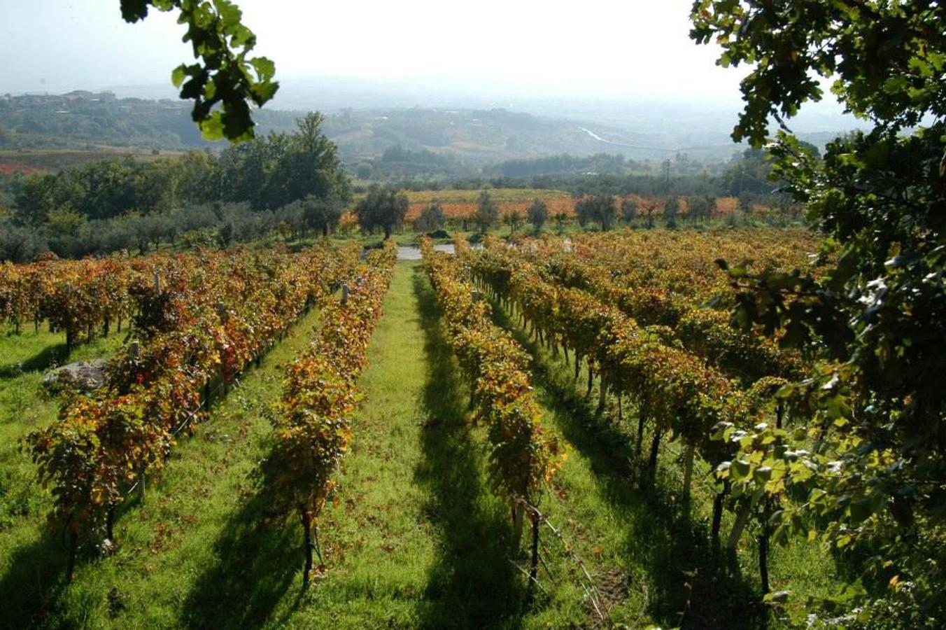 Sannio Beneventano: una smart land vitivinicola e rurale