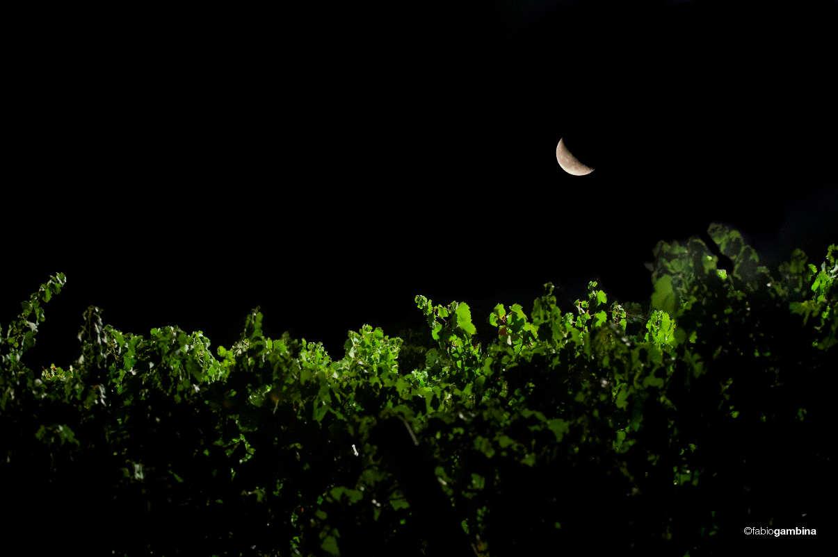 Notturno per vigna e percussioni