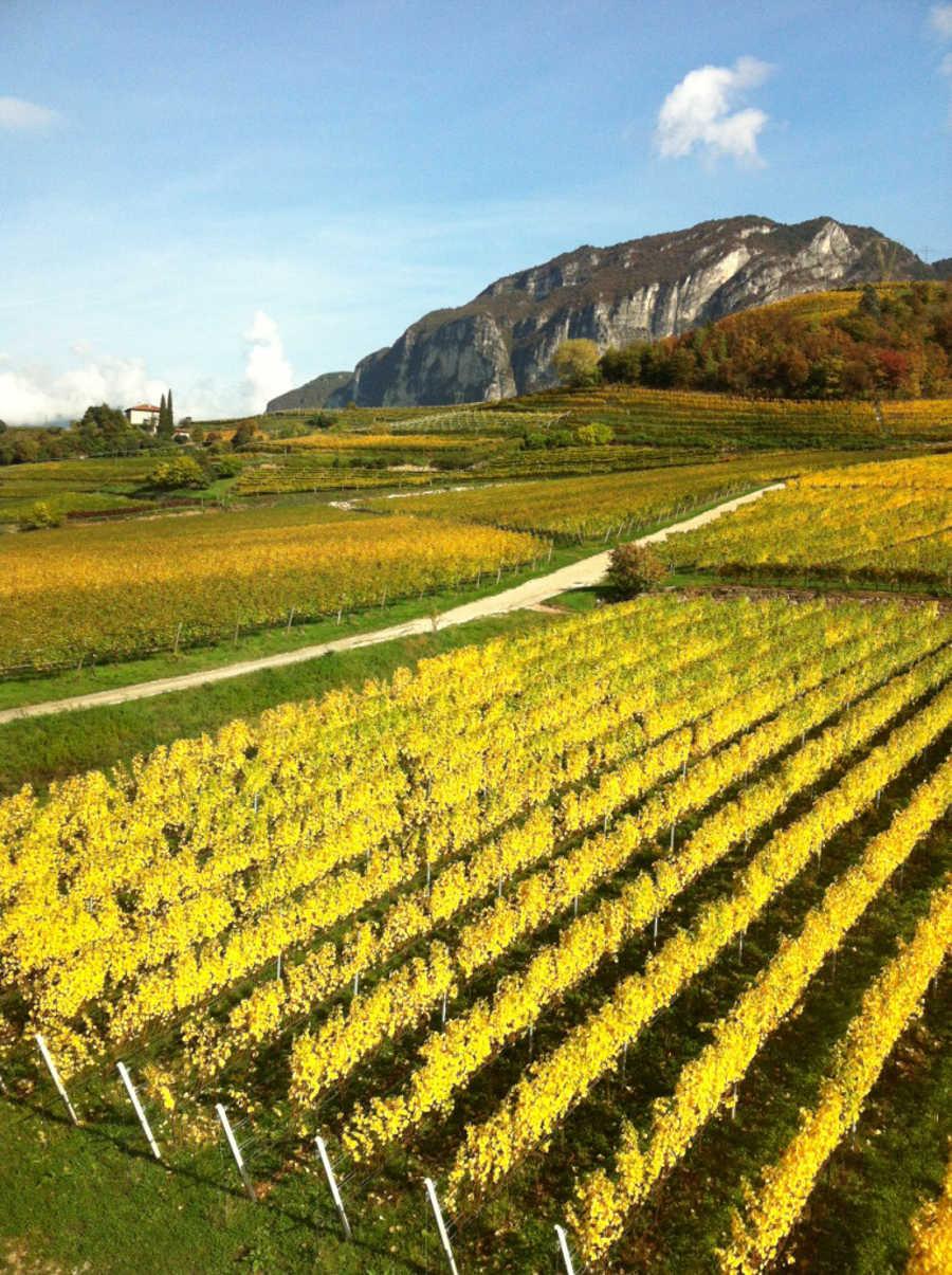 Cantine Aperte in Vendemmia in Trentino-Alto Adige