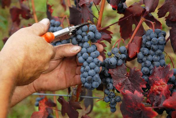 Colline Novaresi, a passeggio tra le vigne