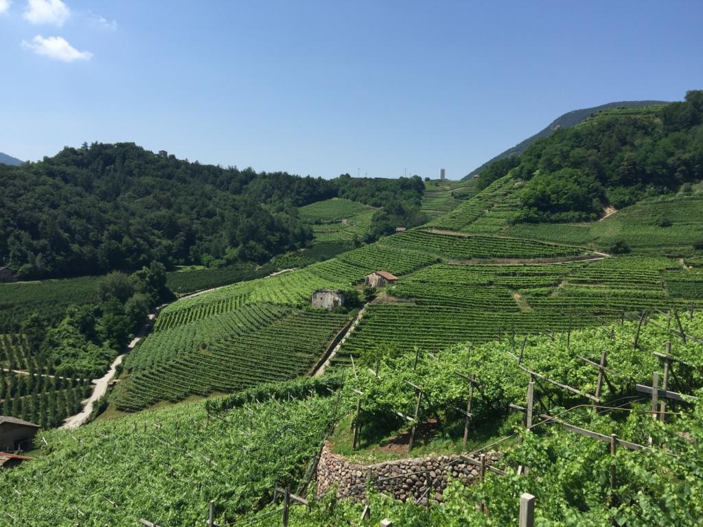 La magia della Val di Cembra alla Festa dell'Uva di Verla di Giovo