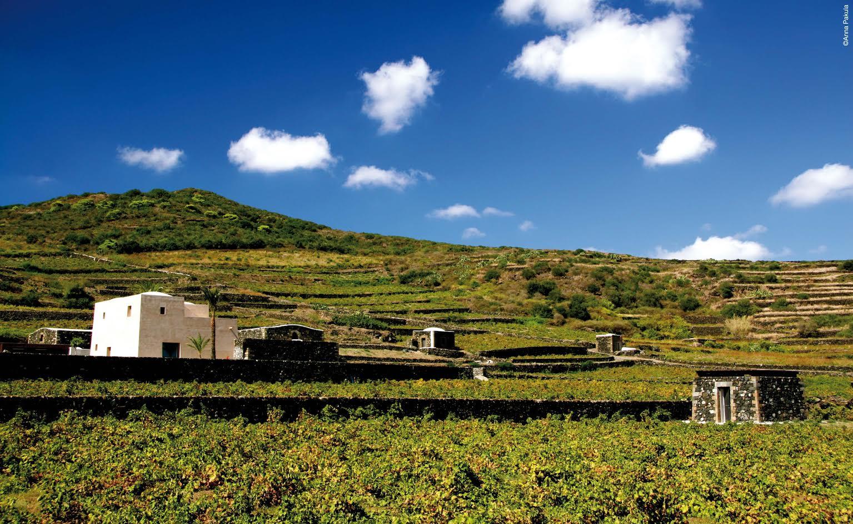 Da Pantelleria un appello al valore dei paesaggi terrazzati