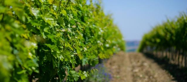 Regione Abruzzo: vigne, paesaggi ed enoturismo, Città del Vino entra in cabina di regia