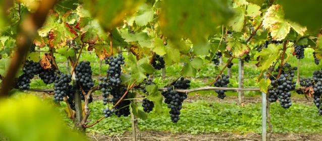 Testo Unico del Vino, l'Associazione in audizione alla Commissione Agricoltura del Senato