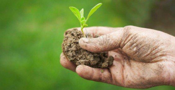 Biotecnologie e agricoltura di precisione, il piano del Mipaaf