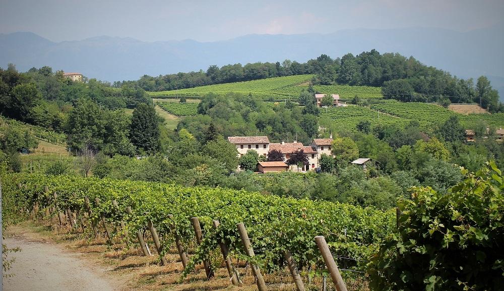 Viticoltura a San Pietro di Feletto, gli incontri 2017