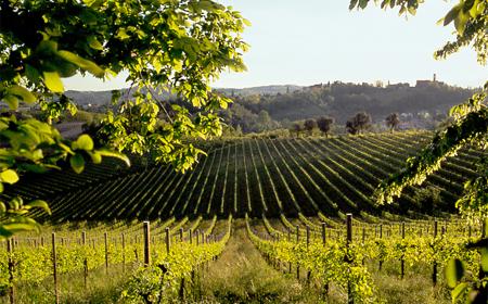 Riconoscimento Unesco, le Città del Vino d'Europa a fianco del territorio del Prosecco Superiore Docg