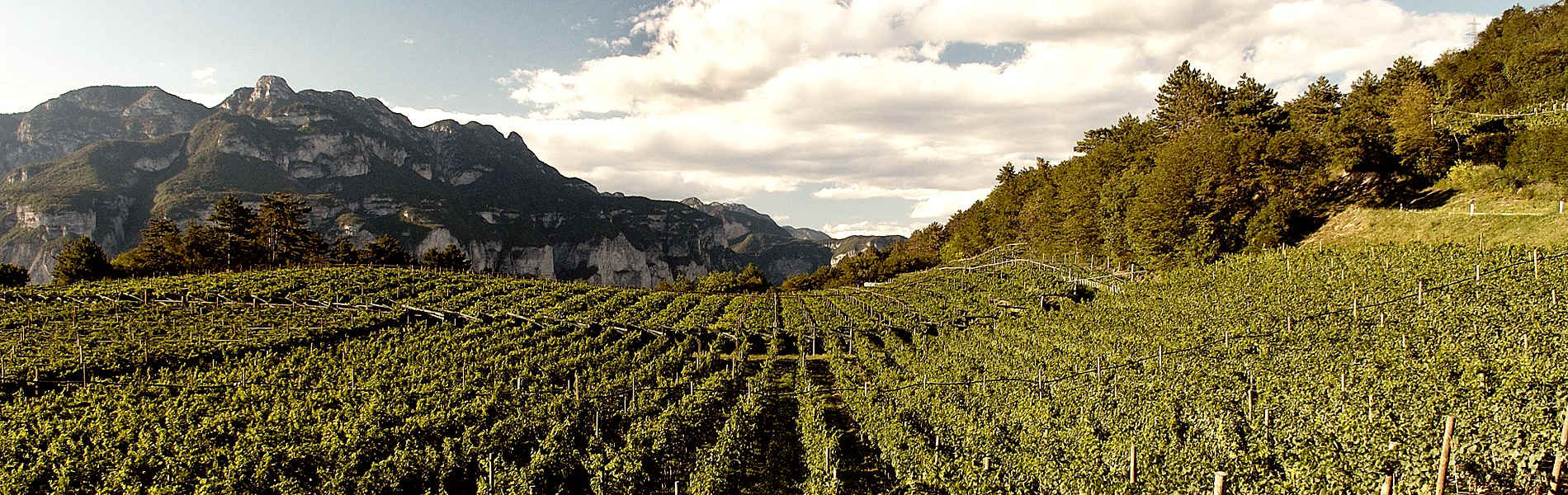 Città del Vino - Trentodoc sulle dolomiti Val di Fassa