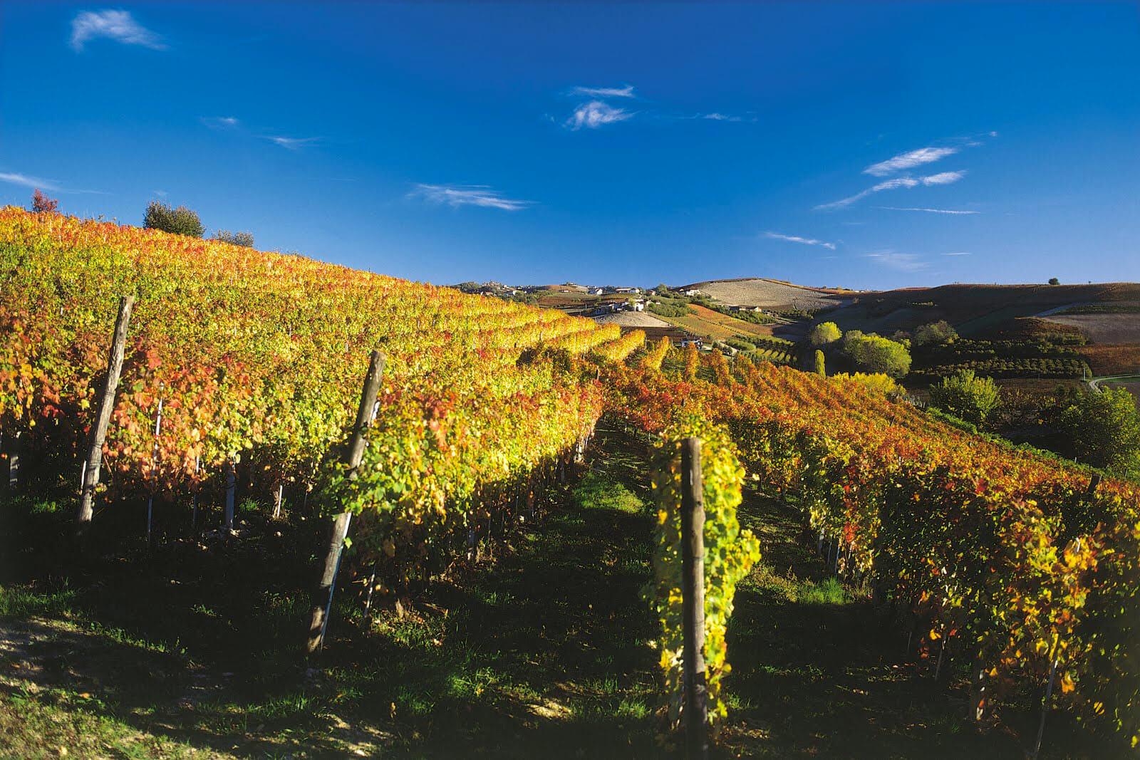 Vini Alto Piemonte in rassegna a Novara