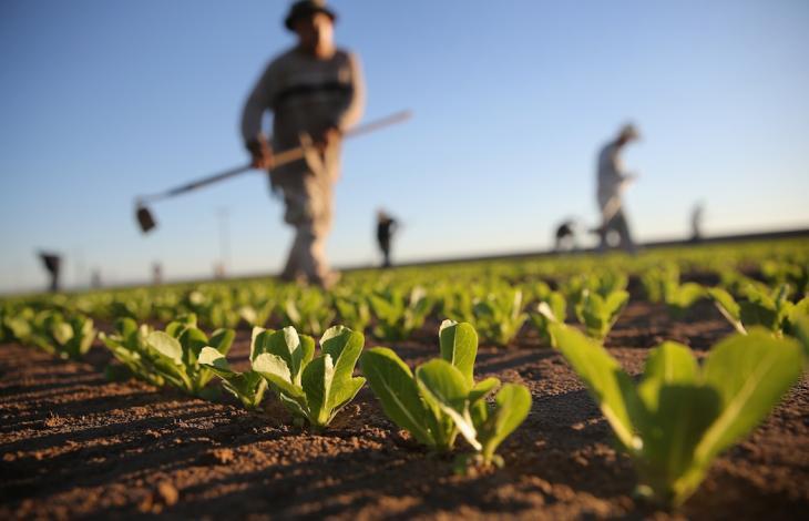 Agricoltori per passione, una nuova tendenza
