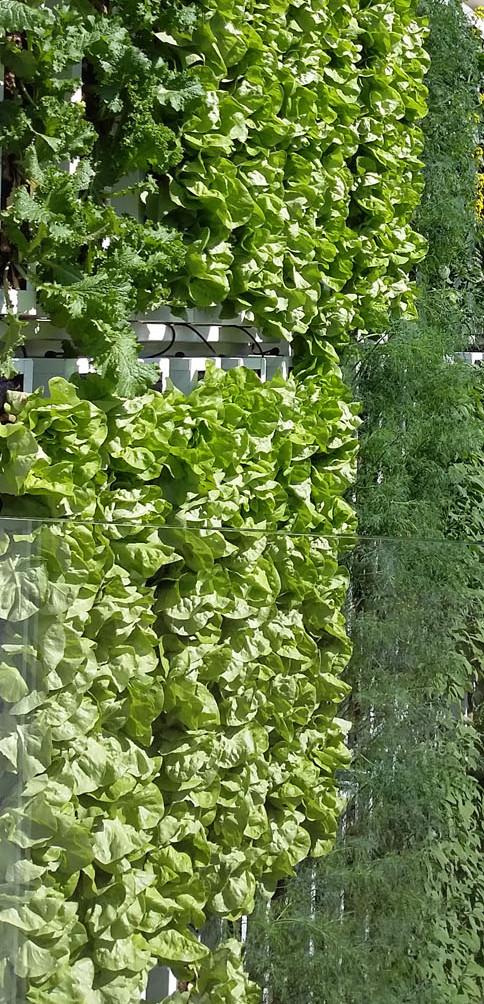 La vigna è un giardino verde