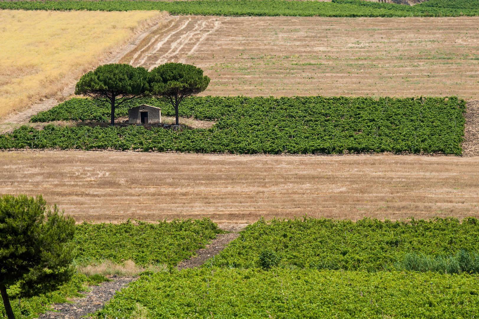 La Sicilia al WINE SPECTATOR GRAND TASTING 2017