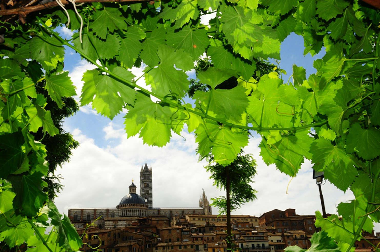 Progetto nazionale di sviluppo locale nei territori a vocazione vinicola