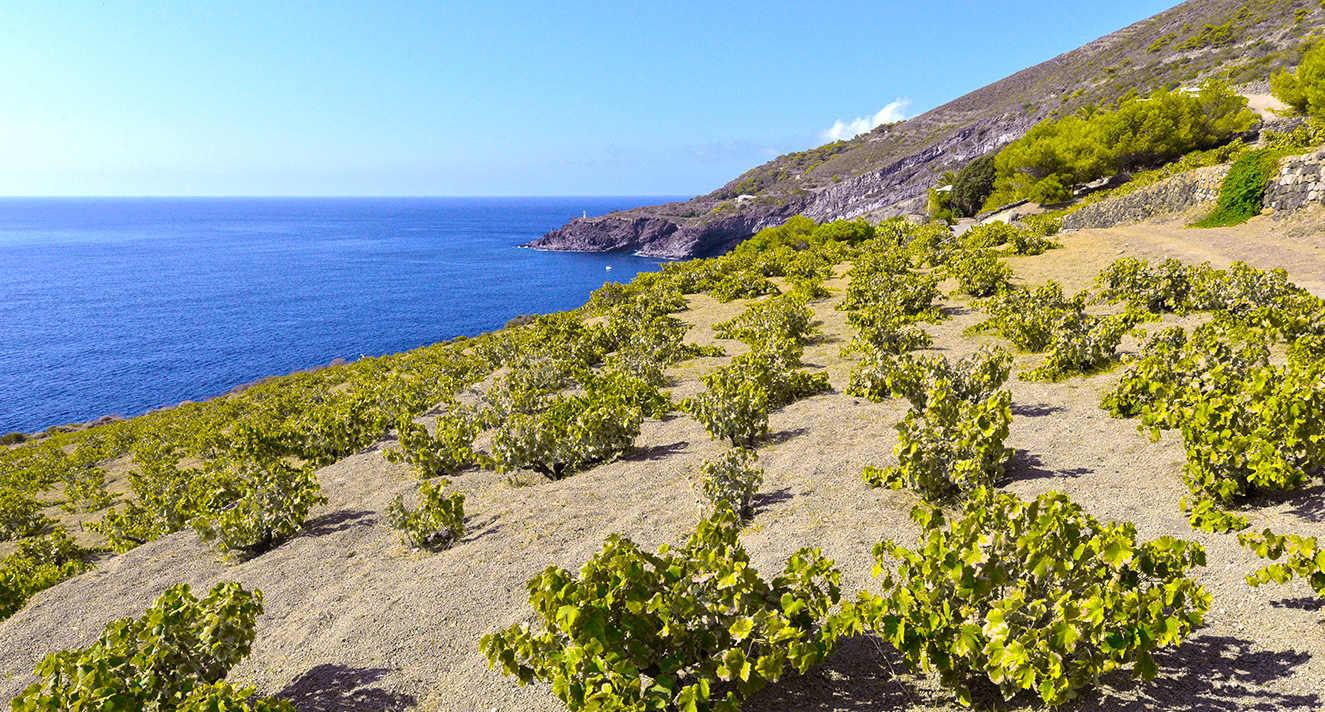 La Sicilia della bellezza e del vino