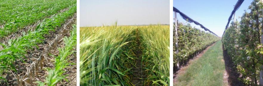 Ricerca Agri2000 su impatto economico del diserbo chimico