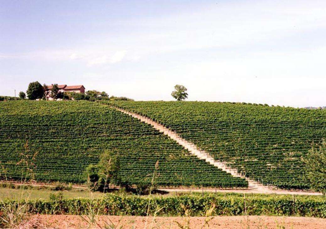 Enoregioni italiane: Basso Monferrato e Colline Torinesi