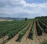 Enoregioni italiane: Tortonese