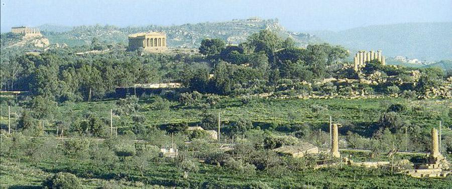 """""""Diodoros"""": rinasce il vino della Valle dei Templi"""