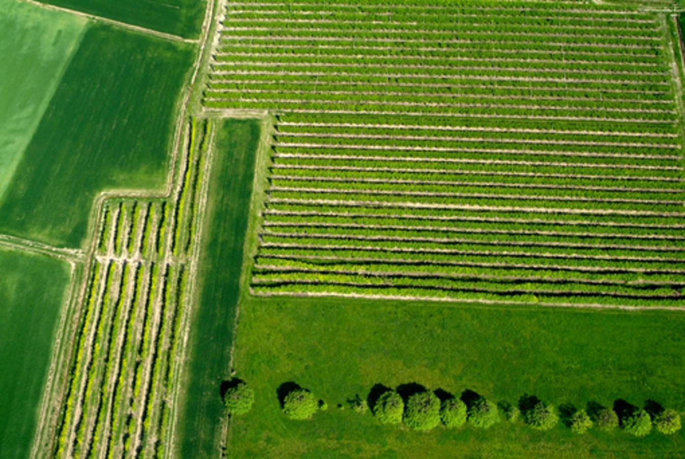 Le Città del Vino salutano il riconoscimento Unesco a Langhe Roero e Monferrato