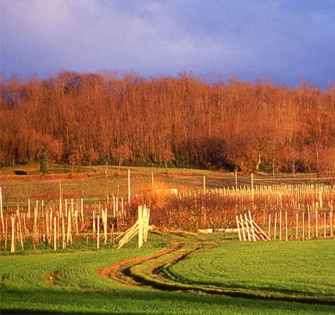 Enoregioni italiane: Garda Lombardo