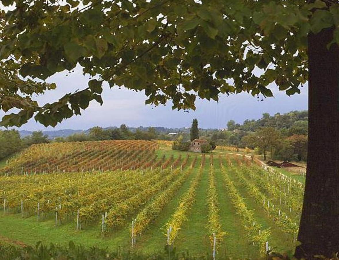 """""""Opportunità del P.S.R. dell'Umbria per il settore vitivinicolo"""""""