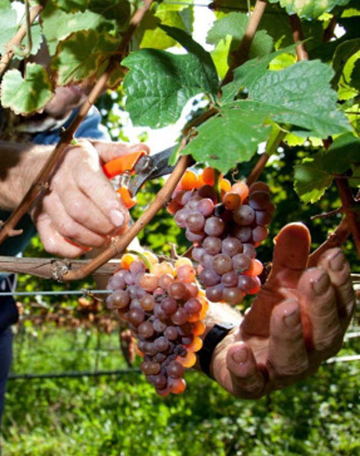 Enoregioni italiane: Valdadige Altoatesina