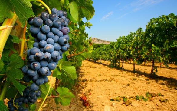 Anteprime di Toscana, buy wine per tutte le denominazioni