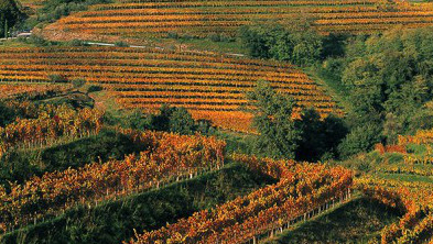Enoregioni italiane: Colli Orientali Friulani