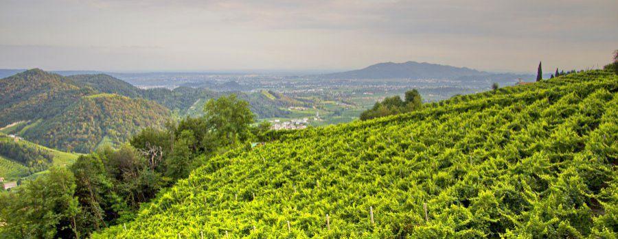 Enoregioni italiane: Conegliano e Valdobbiadene