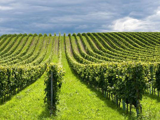 Italia leader nel bio in agricoltura