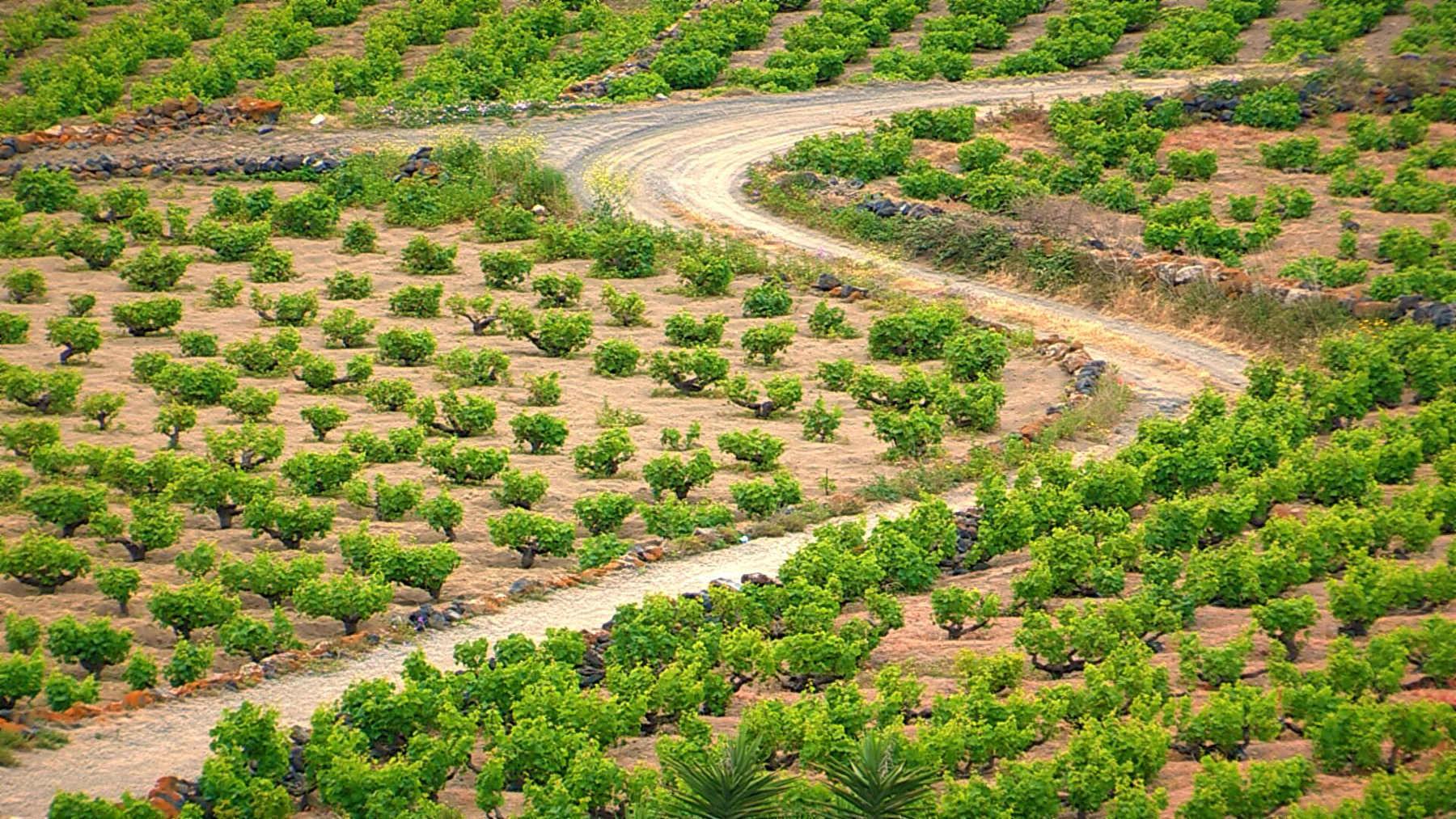 Nuovi scenari per l'Isola e il Passito di Pantelleria