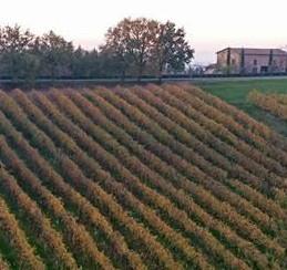 Enoregioni italiane: Terre dei Lambruschi Emiliani