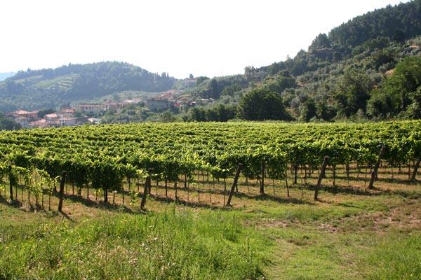 Enoregioni italiane: Colline Fiorentine e Carmignano
