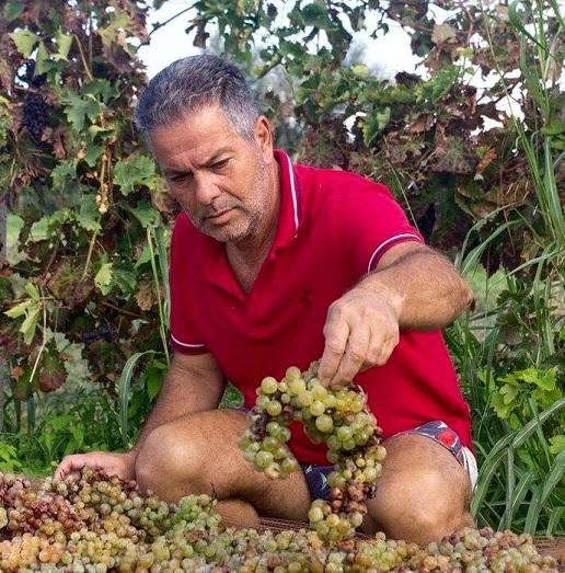 Nasce la Rete delle vigne del Greco di Bianco