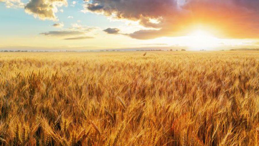 Agea: pagati 283 milioni di anticipi aiuti europei a 60mila imprese agricole