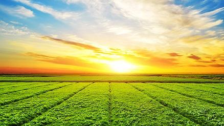 Aperta vendita 8mila ettari Banca nazionale delle terre agricole
