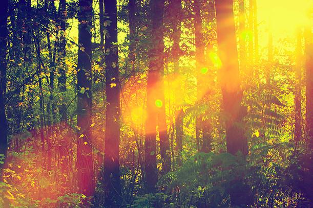 Via libera da CDM a Testo unico forestale, riforma Agea e DDL reati agroalimentari