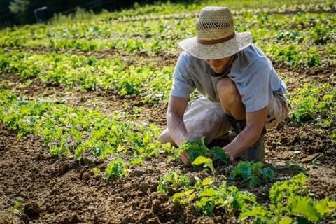 In Toscana passa la legge sull'agricoltura contadina
