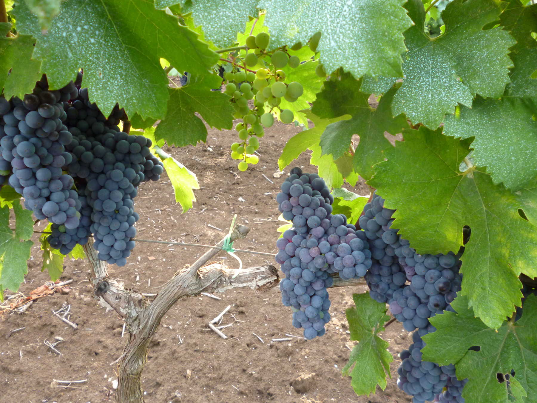 Dai nostri vitigni un'eccellenza assoluta